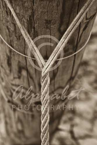 Letter Y - Y012 - Alphabet Photography